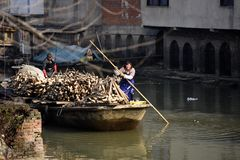 Étang de lotus de travailleurs migrants d'hiver pour gagner la monnaie métallique Image libre de droits