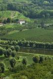 Étang de pêche italien? dans le pays de vin images stock