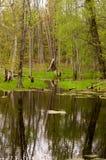 Étang de région boisée Photo libre de droits