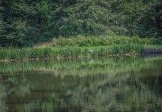 Étang de truite Photo stock