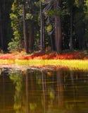 Étang de Yosemite Images libres de droits