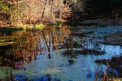 Étang du Missouri dans l'automne Photo stock
