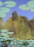Étang en bambou Images libres de droits