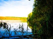 Étang et forêt de septembre photo libre de droits