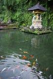Étang et poissons dans un temple dans Bali photographie stock