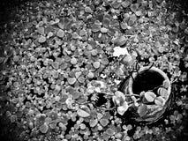 Étang flourishing Image libre de droits