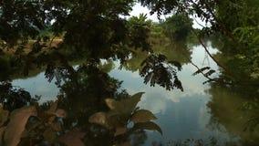 Étang paisible sous les feuilles d'arbre banque de vidéos