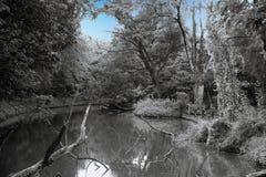 Étang rampant dans la forêt au fond crépusculaire image stock