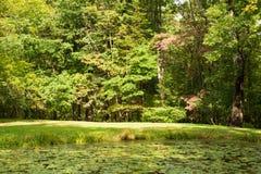 Étang rattrapé par des protections de lis en parc d'état de Watkins image libre de droits