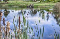Étang rural en roseau Images libres de droits