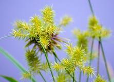 Étang Sage Wildflowers Images libres de droits