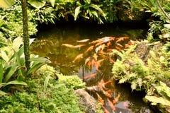 Étang tropical Images libres de droits