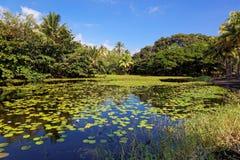 Étang tropical de lis Image libre de droits
