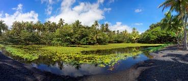 Étang tropical de lis Photographie stock libre de droits