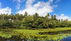 Étang tropical de lis Images libres de droits