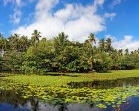 Étang tropical de lis Photographie stock