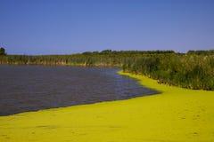 étang vert couvert de mousse Images libres de droits