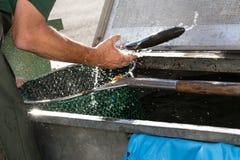 étangs d'élevage de poissons Photos libres de droits