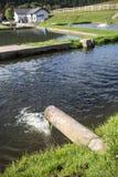 étangs d'élevage de poissons Photo libre de droits