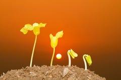 Étape de l'élevage avec le fond de coucher du soleil Images stock