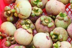 Étape de mangoustan au jardin Photographie stock