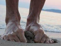 Étape de pied Photographie stock libre de droits