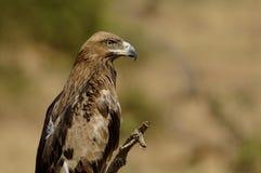 Étape Eagle Images stock