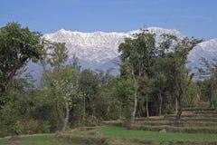 Étape organique rurale cultivant dans l'Inde de l'Himalaya images libres de droits