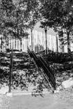 Étapes de brique et ombres de branche d'arbre Images stock