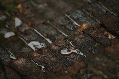 Étapes de brique sous la pluie