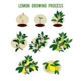 Étapes de germination de graine d'usine illustration libre de droits