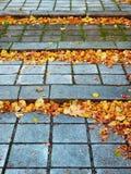 Étapes en pierre avec des feuilles Photos libres de droits
