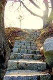 Étapes en pierre s'attaquant après des arbres au parc de fort d'étape à Gloucester le Massachusetts image stock