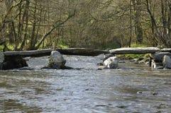 Étapes et rivière Barle de Tarr Images libres de droits