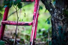Étapes jetées de récolteuses de fruit Image stock