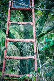 Étapes jetées de récolteuses de fruit Photographie stock