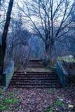 Étapes mystérieuses dans la région forestière inexploitée Photo libre de droits