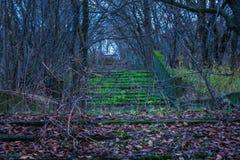 Étapes mystérieuses dans la région forestière inexploitée Photographie stock libre de droits