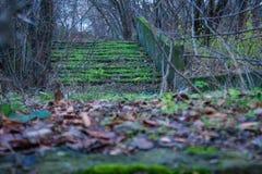 Étapes mystérieuses dans la région forestière inexploitée Image stock