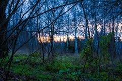 Étapes mystérieuses dans la région forestière inexploitée Photo stock