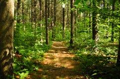 État Forest Connecticut de Topsmead photo libre de droits