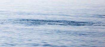 Étendue de l'eau dans le lac comme contexte photos libres de droits