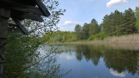 Étendue de l'eau, des roseaux et des bois photos stock