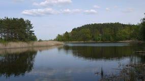 Étendue de l'eau, des roseaux et des bois photo libre de droits