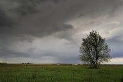 Étendue de terre Photo stock