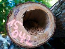 Étiqueté abattant des morts tenant le trou de vermine de parasite d'arbre Photographie stock