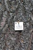 Étiquette d'arbre photographie stock libre de droits