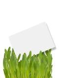Étiquette dans l'herbe Photo libre de droits