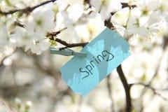 Étiquette de ressort et fleurs blanches dans un jour ensoleillé de ressort Photographie stock libre de droits
