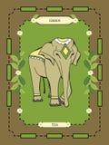 Étiquette de thé vert Photos libres de droits